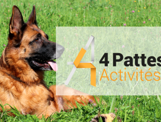 Logo «4 pattes activités»